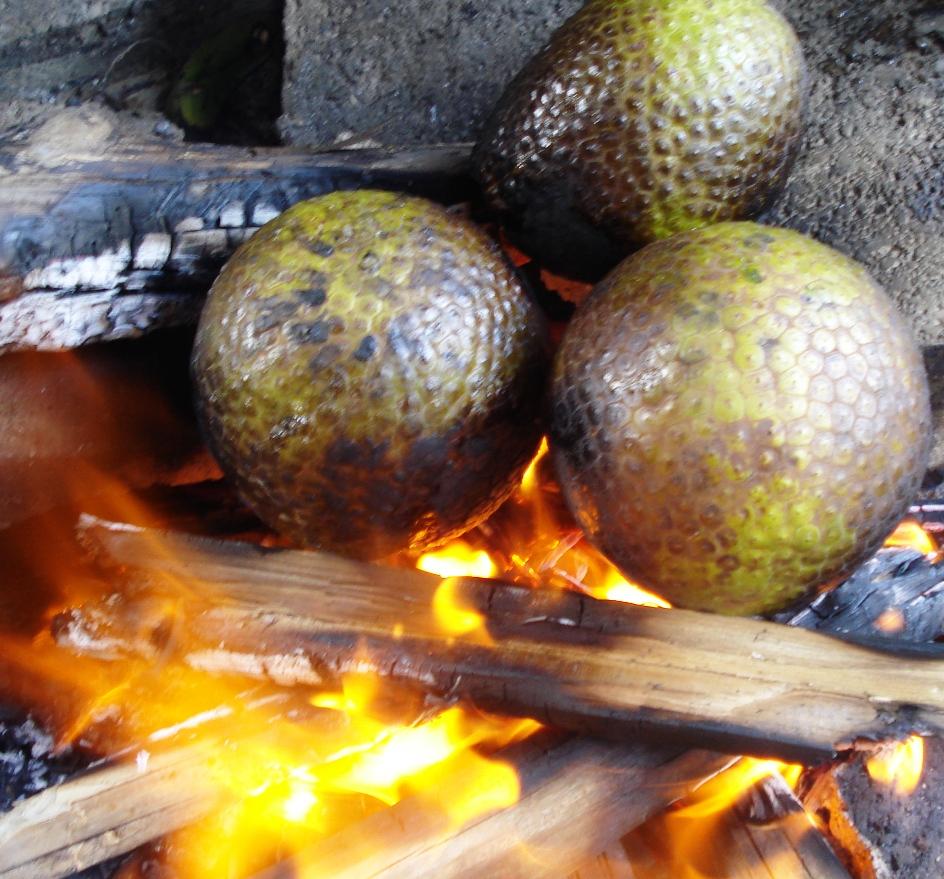 Jamaican Breadfruit